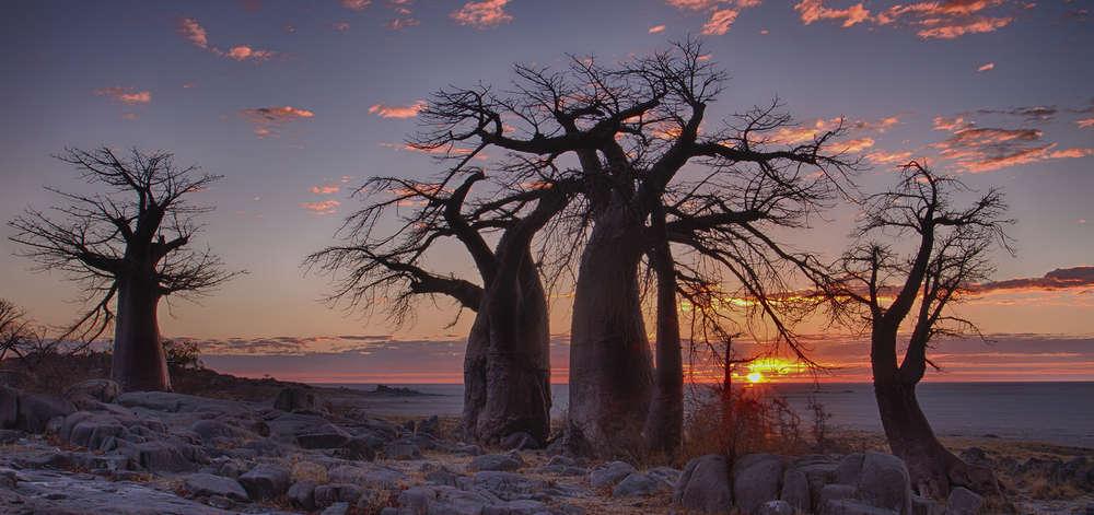 Coucher de soleil dans les Pans du Makgadikgadi