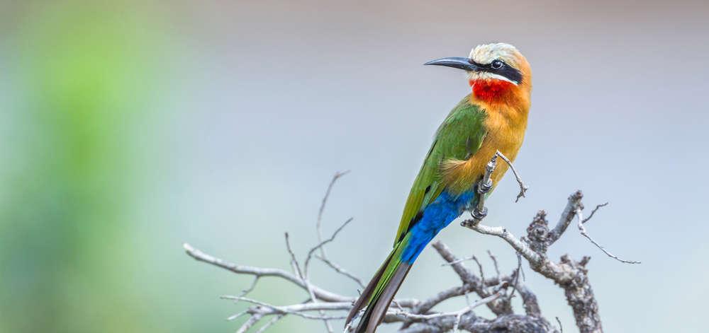 Ornithologie dans le Delta