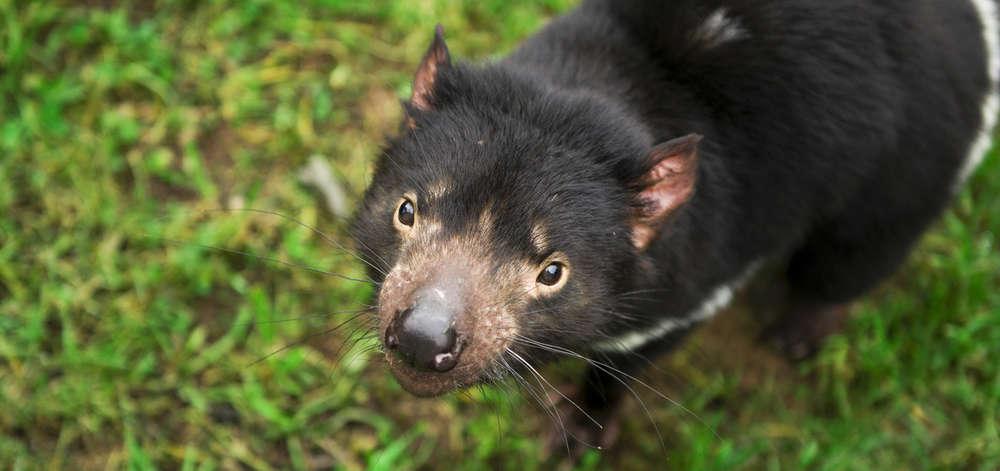 Tasmanie site de rencontre rencontres canard leurres