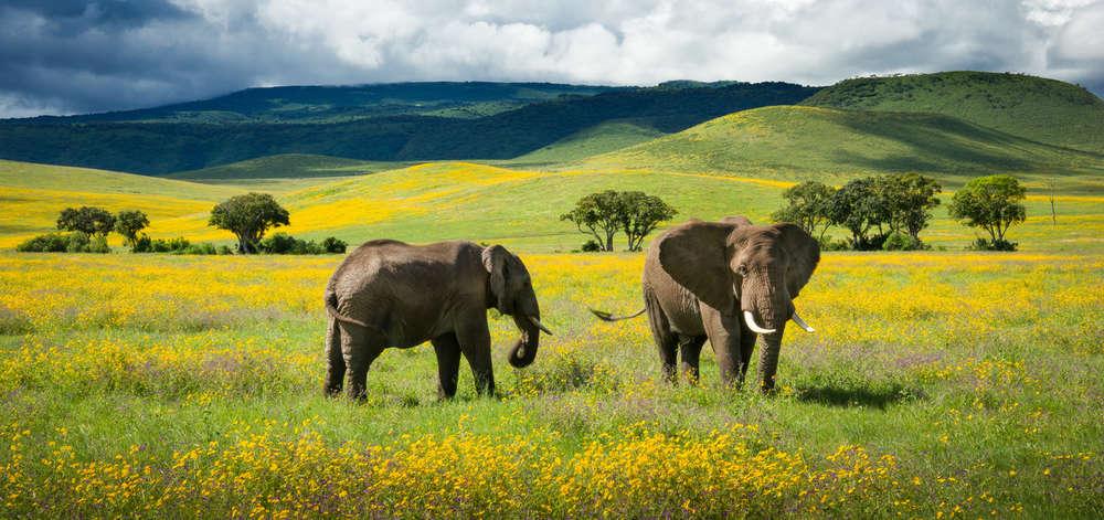 Éléphants dans le Cratère Ngorongoro