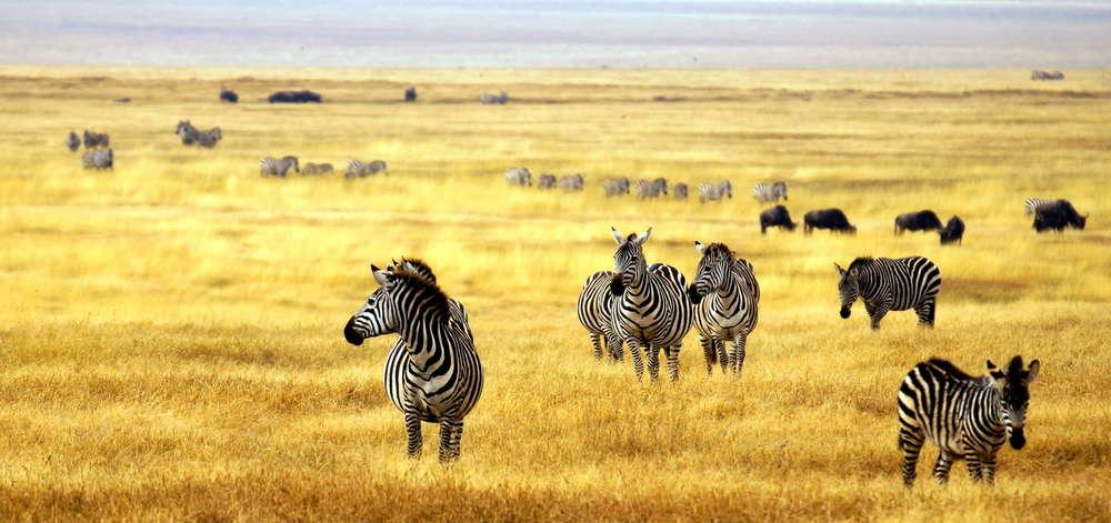 Plaines du Serengeti