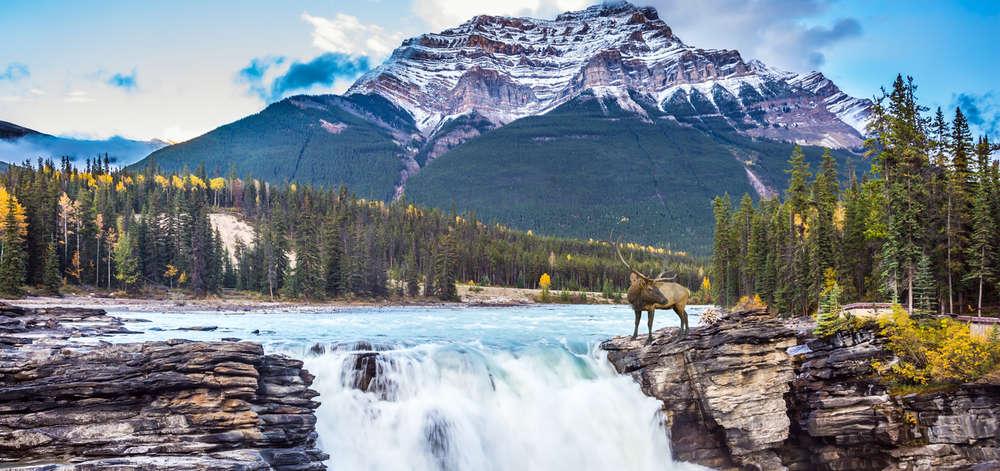 Chutes Athabasca, Jasper National Park