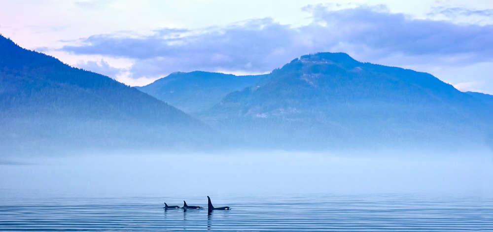 Orques, Vancouver Island