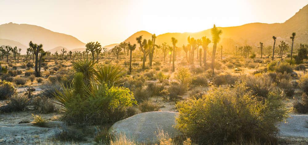 Joshua Tree National Park, Palm Springs