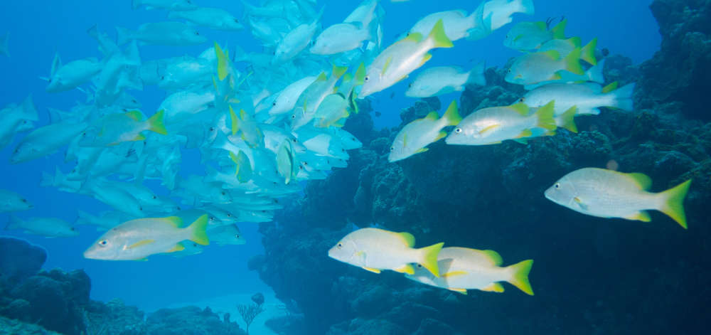 Snorkeling, Holbox