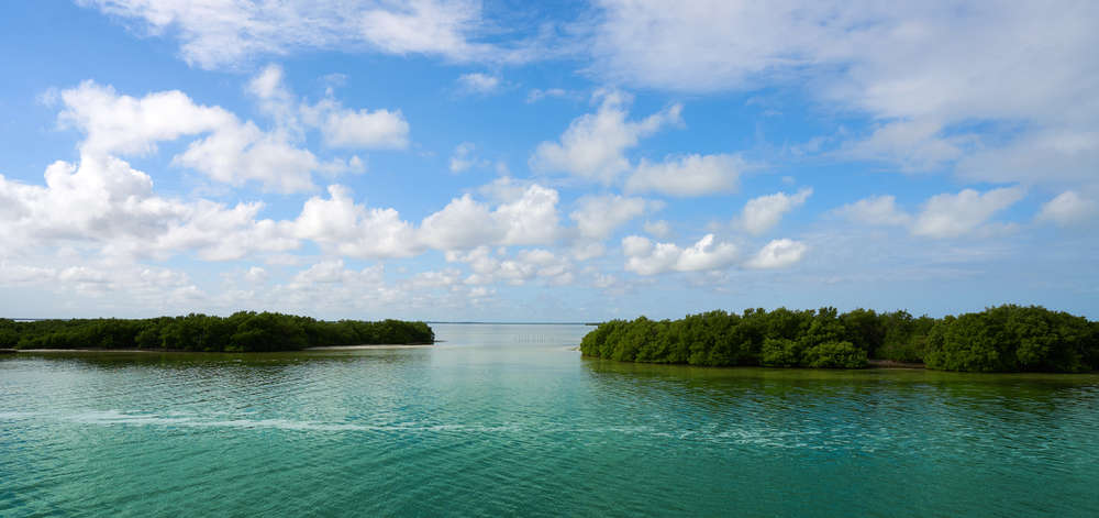 Mangrove, Holbox