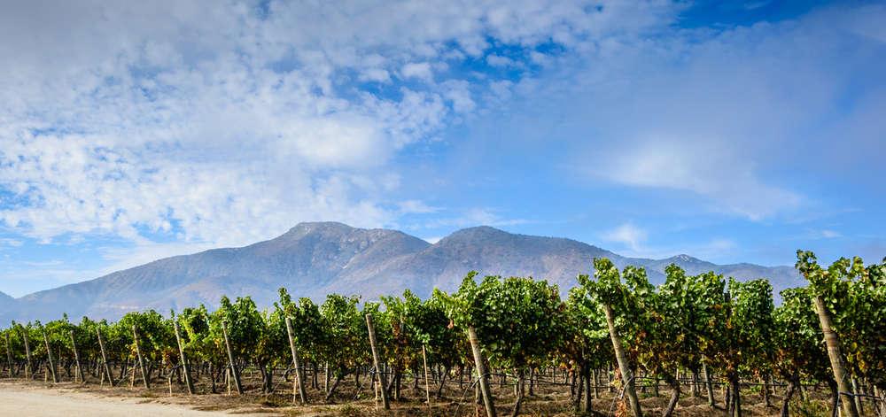 Vignoble chilien